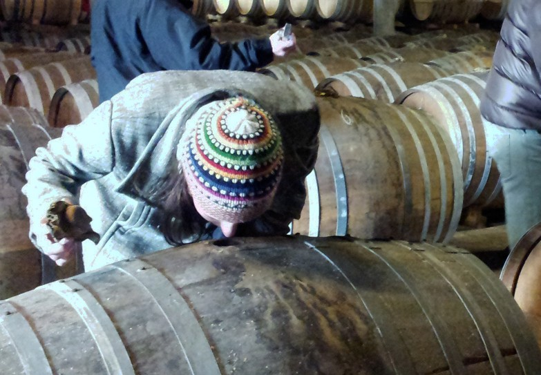 Discovery of aromas of cognac strait from a cask during an excursion in the vineyards of Cognac